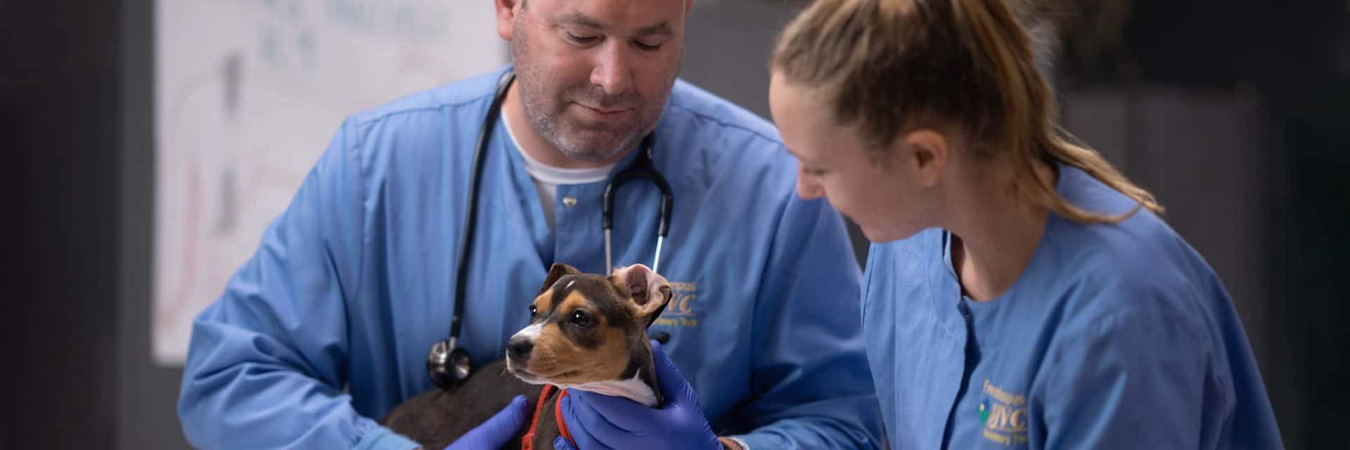 Man and young woman in blue scrubs examining small dog.
